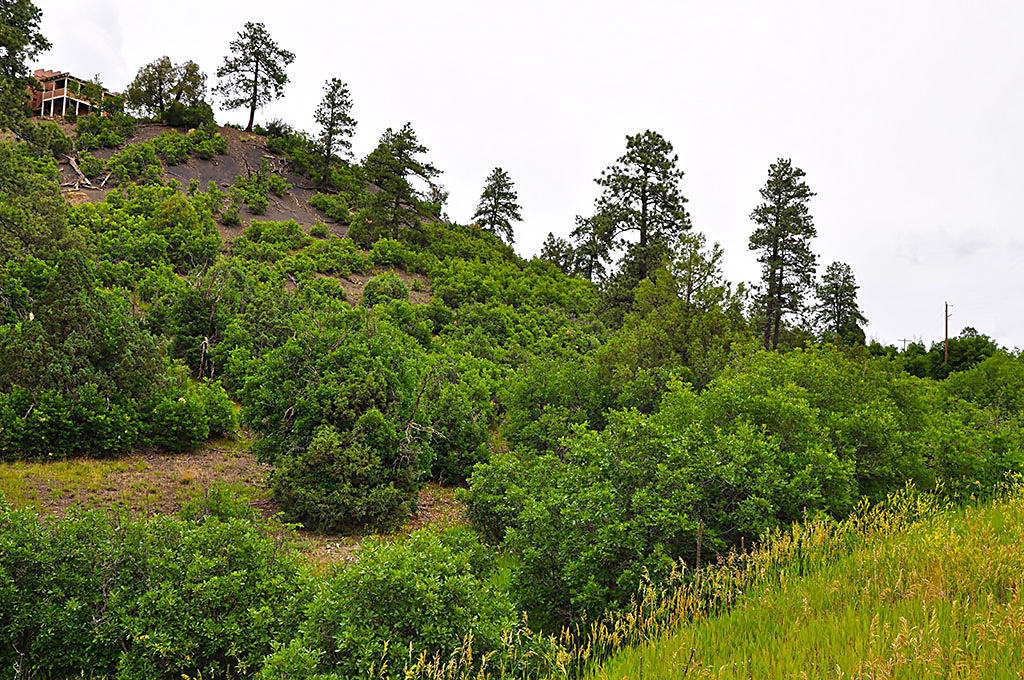 Colorado Acreage Near Pagosa Springs - Image 4