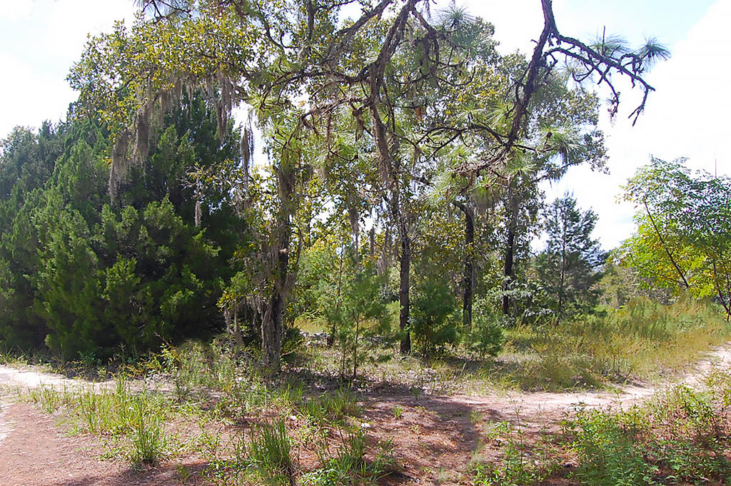 Large Residential Lot in Quiet Area Near Gulf Coast - Image 3