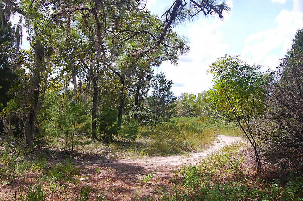 Large Residential Lot in Quiet Area Near Gulf Coast - Image 4