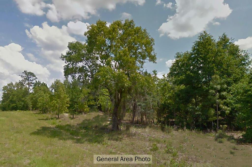 Emerald 1+ Acre Florida Wonderland west of Gainesville - Image 4