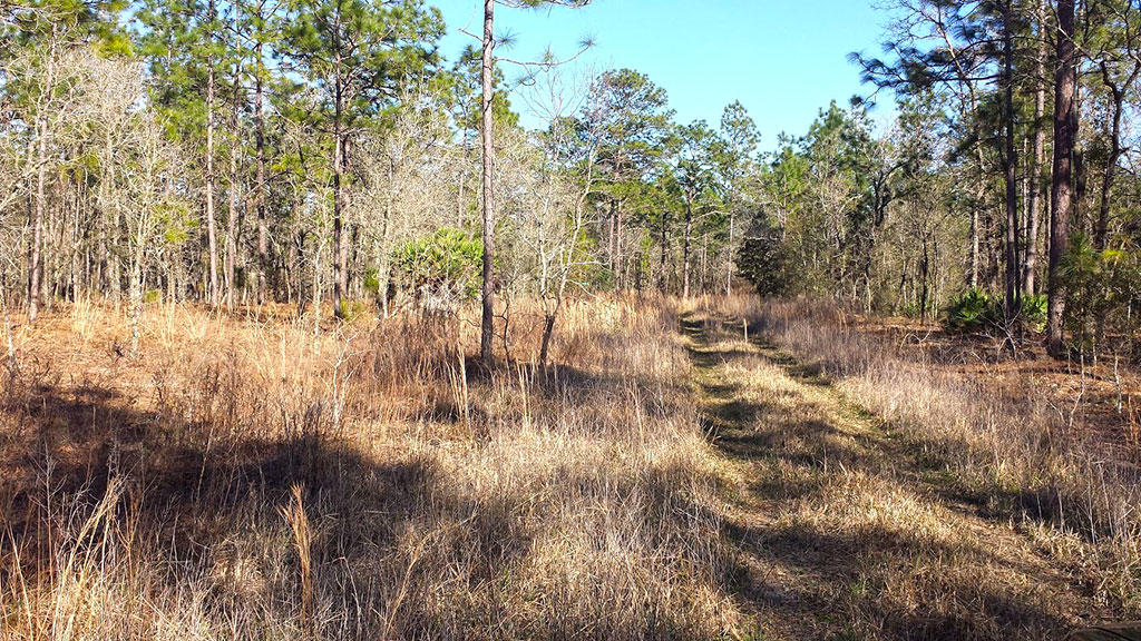Private Property Just Under a Half Acre - Image 3
