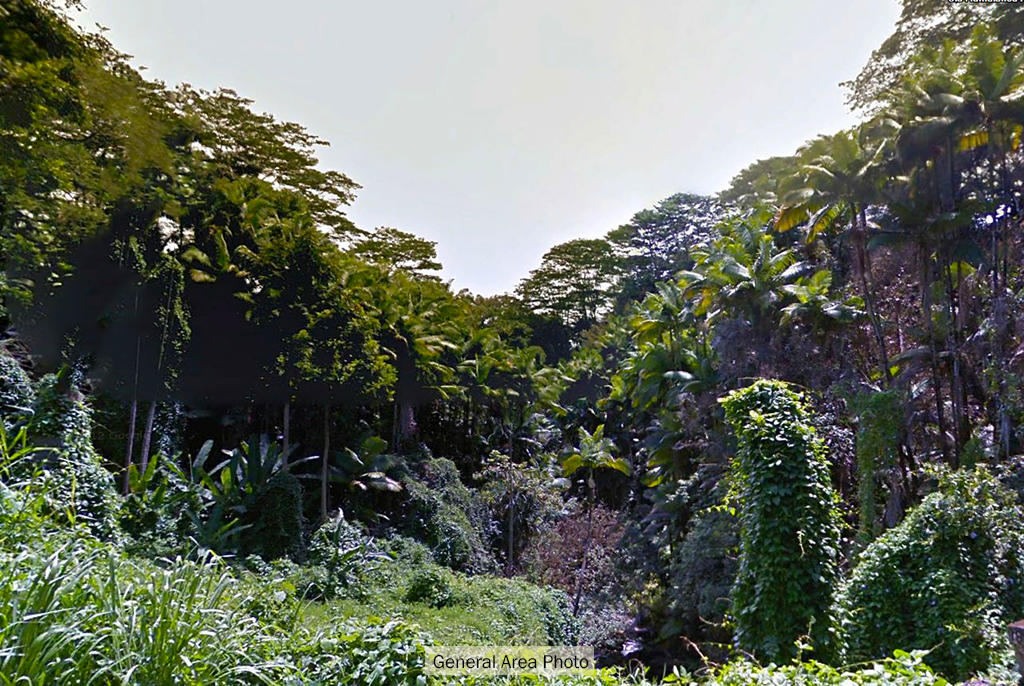Large Residential Lot in Hawaii Close to the Beach - Image 4