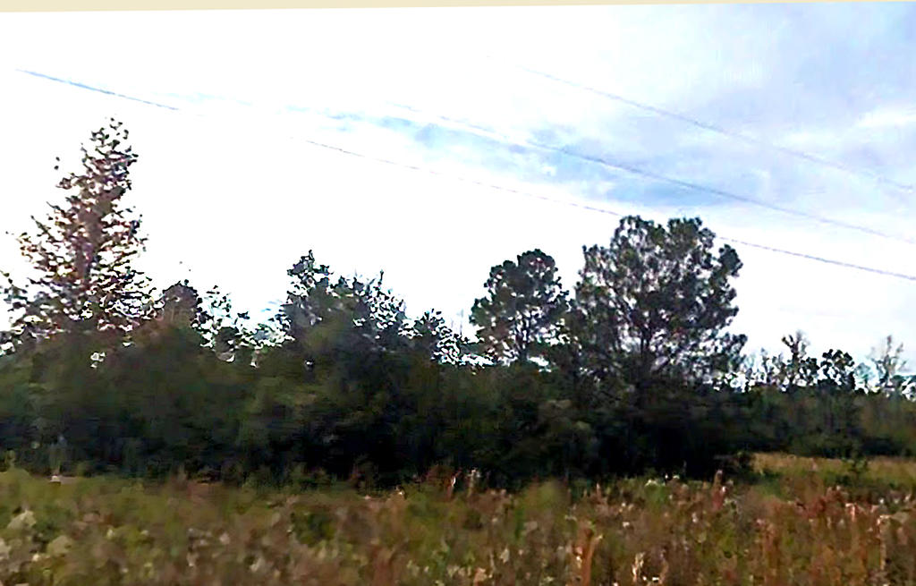 Half Acre with Tons of Potential Only Half Hour from Pensacola - Image 4