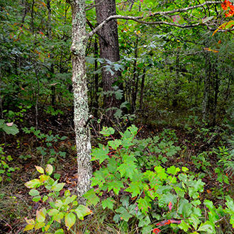 Flat, Tree-Covered Tennessee Gem 2 Miles from Commercial Center - Image 1