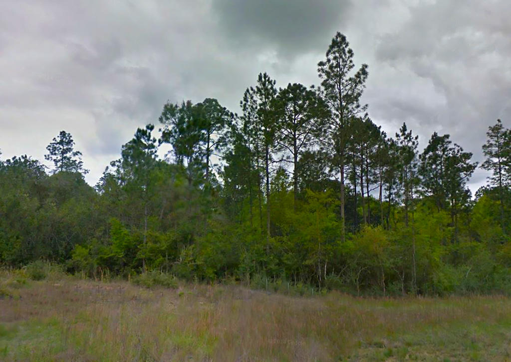 Small Rural Agricultural Lot on the Outskirts of Defuniak Springs - Image 5