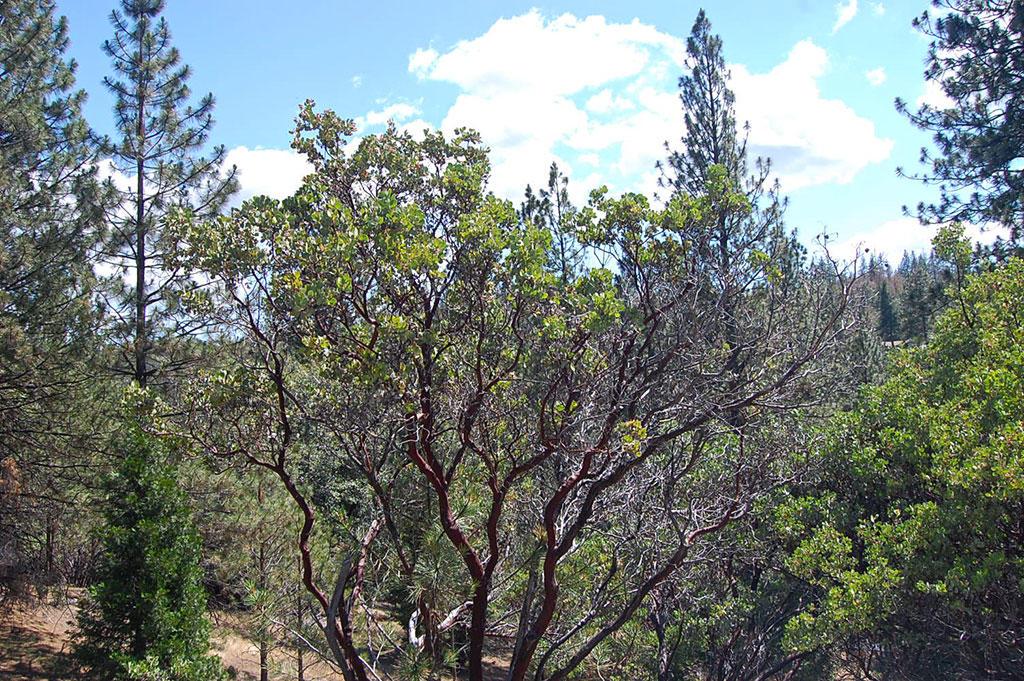 Hillside Residential Lot Near Pine Mountain Lake - Image 4