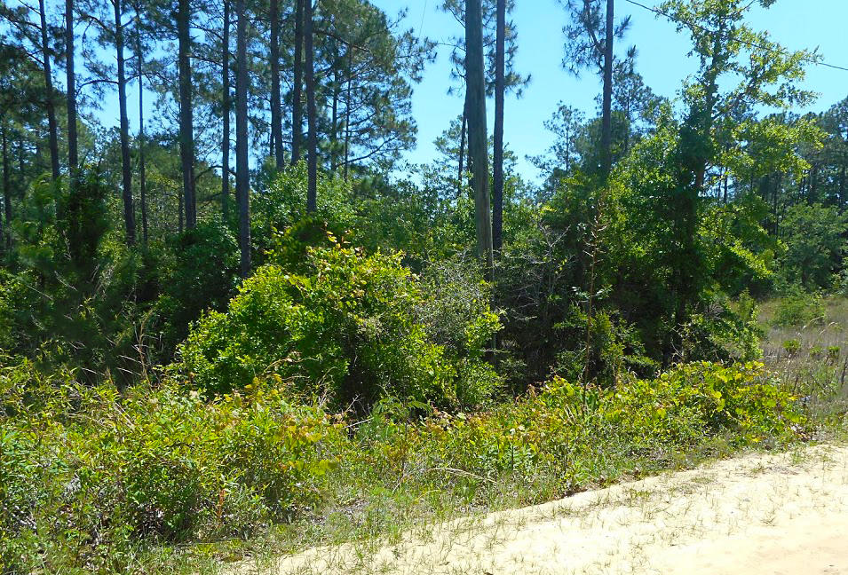Crestview Property Within a Growing Community! - Image 6