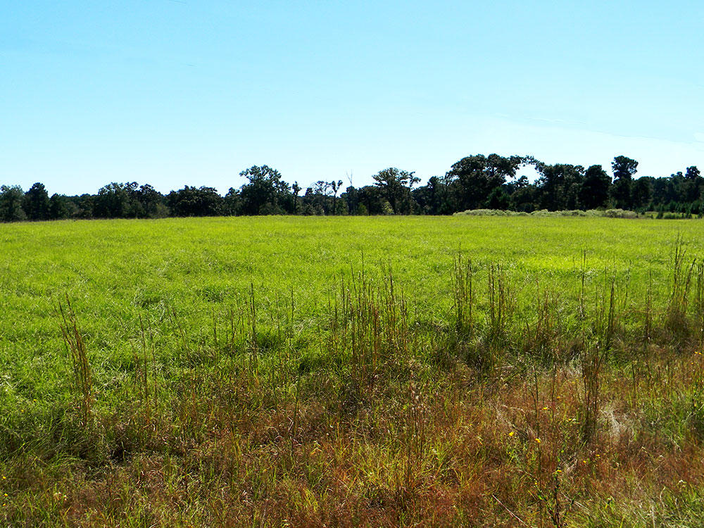 Over One Acre in Exclusive Texas Community - Image 1