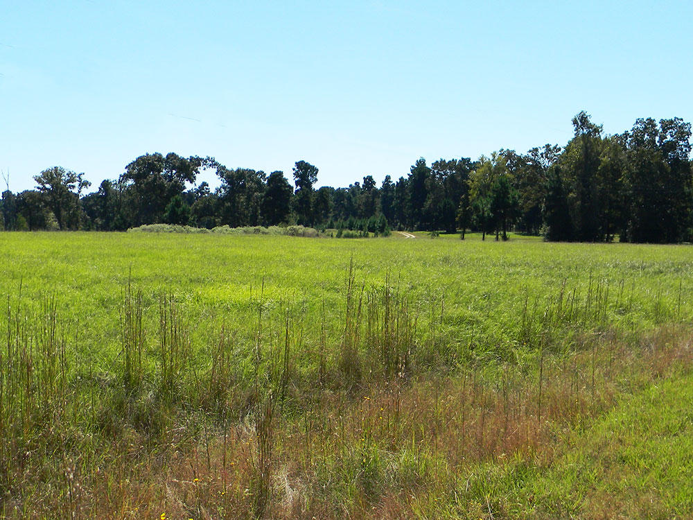 Over One Acre in Exclusive Texas Community - Image 3