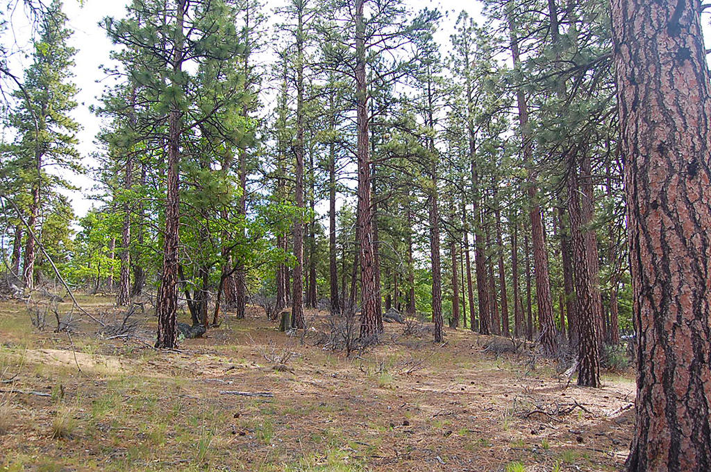 Gorgeous Acreage Among the Towering Pines - Image 4