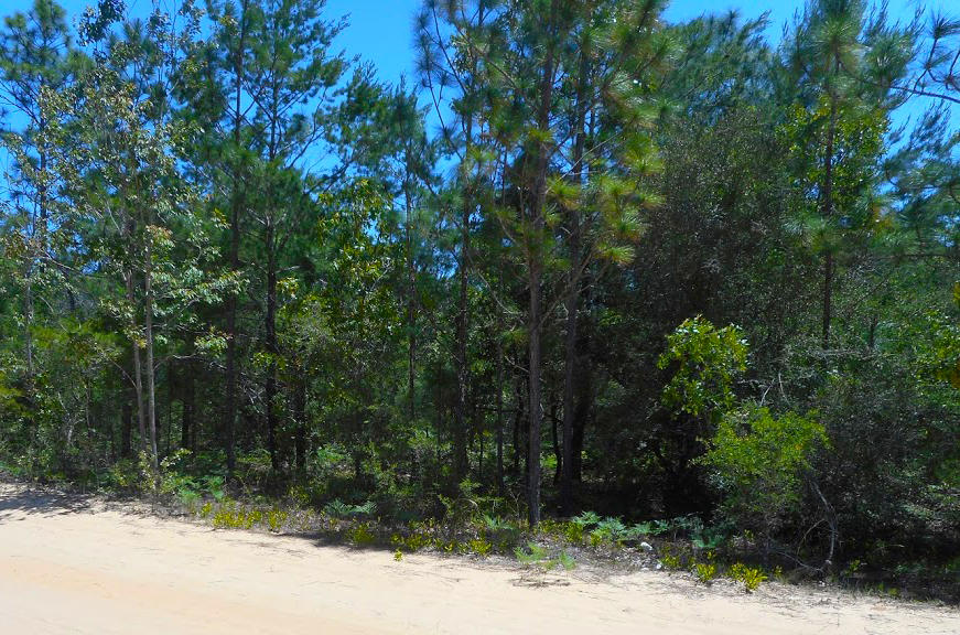 Florida Investment Property in Developing Area - Image 2