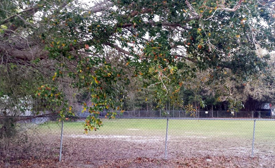 Over a quarter of an acre on SE 131st Place in Ocklawaha - Image 4