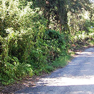 Large Lot on Paved Road in Apopka - Image 0
