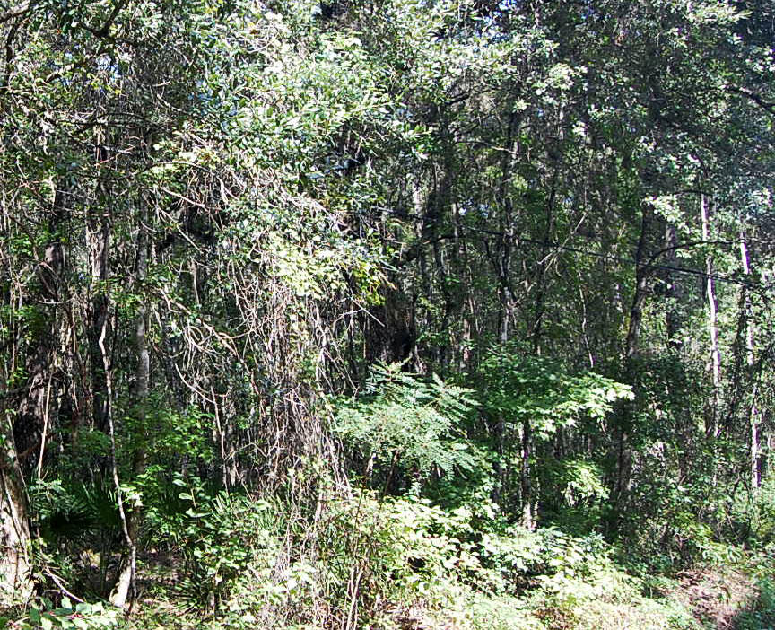Large Acreage in Central Florida - Image 2