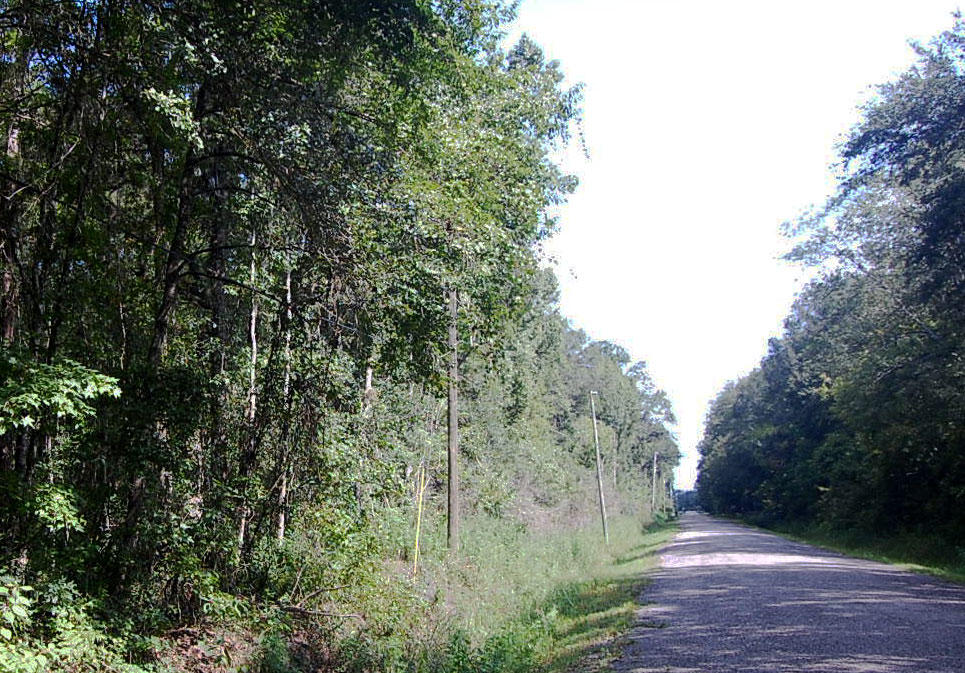 Large Acreage in Central Florida - Image 4