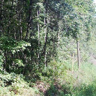 Large Acreage in Central Florida - Image 0