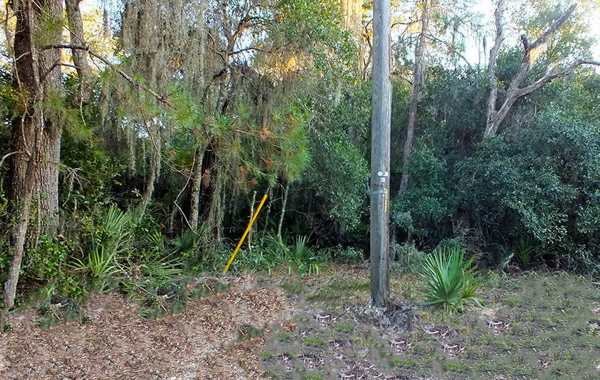 Residential Property Within the Ocala National Forest - Image 4