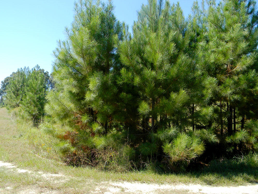 Half Acre Sanctuary North of Houston - Image 3