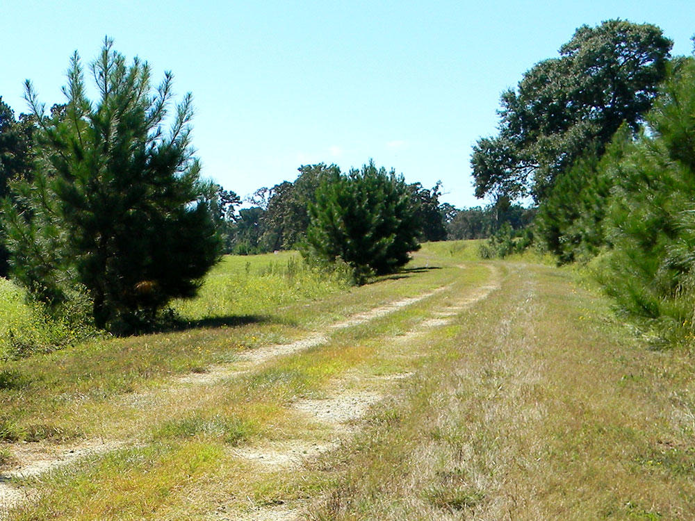 Half Acre Sanctuary North of Houston - Image 4