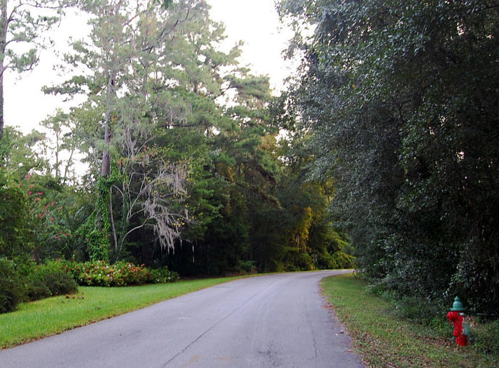 Nice Treed Property Ten Minutes From Alligator Lake Park - Image 2