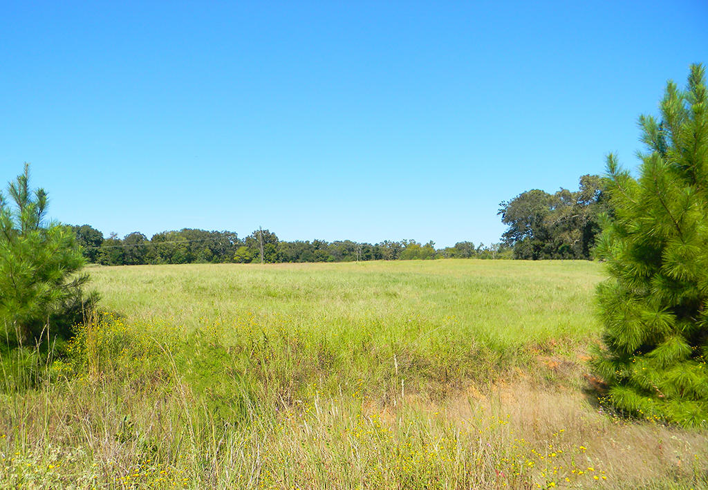 Half Acre Texas Lot in Trinity Plantation - Image 5