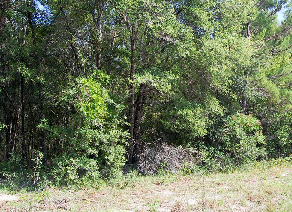 Over 1 Acre Lot Outside of Gainesville - Image 4