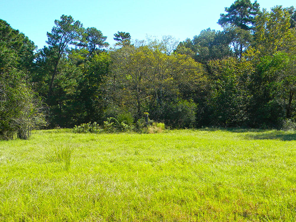 Over an Acre in Relaxing Trinity Plantation - Image 3