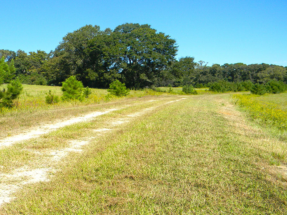 Over an Acre in Relaxing Trinity Plantation - Image 4