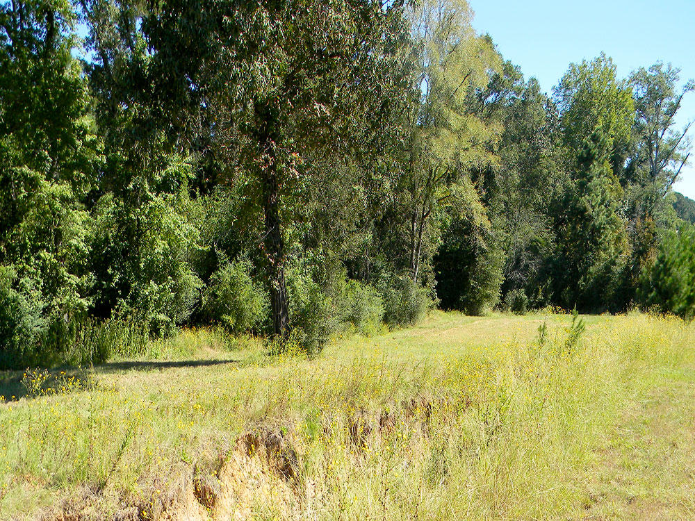 Large Treed Lot Near the Golf Course - Image 4