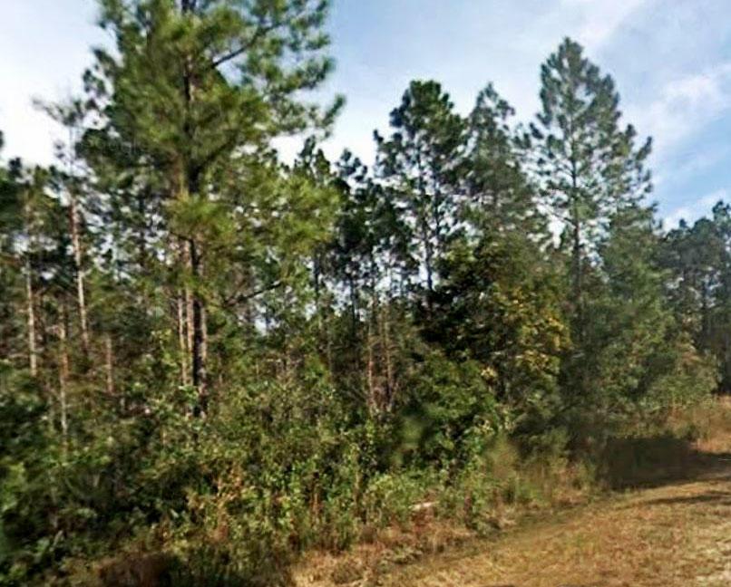 Rural North Eastern Florida Acreage - Image 3
