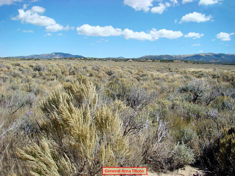Beautiful Five Acres in Southern Colorado - Image 2