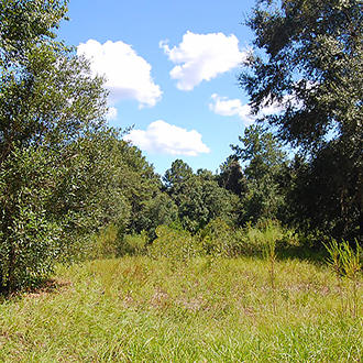 1 Acre Southwest of Jacksonville City Limits - Image 1