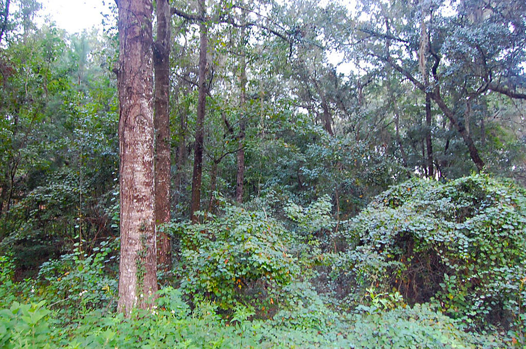 Beautiful Treed Lot with Paved Road Access - Image 5