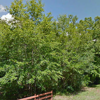 Beautiful Treed Lot with Paved Road Access - Image 1