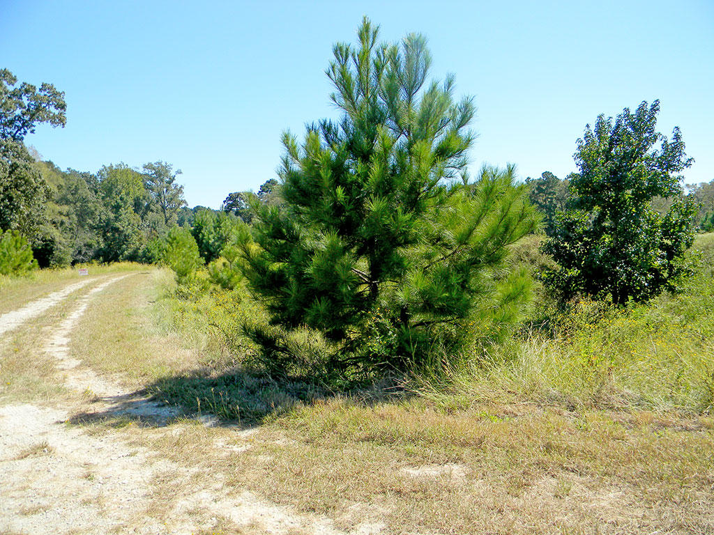 Large Corner Lot in Texas Countryside - Image 5