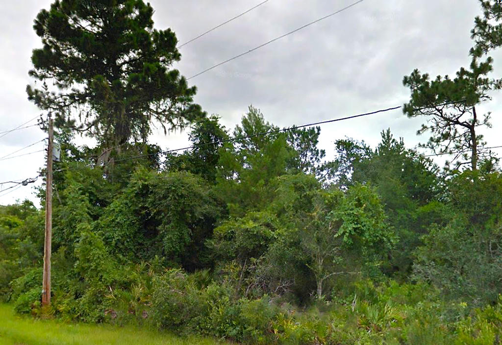 Great Treed Property in Pasco County - Image 4