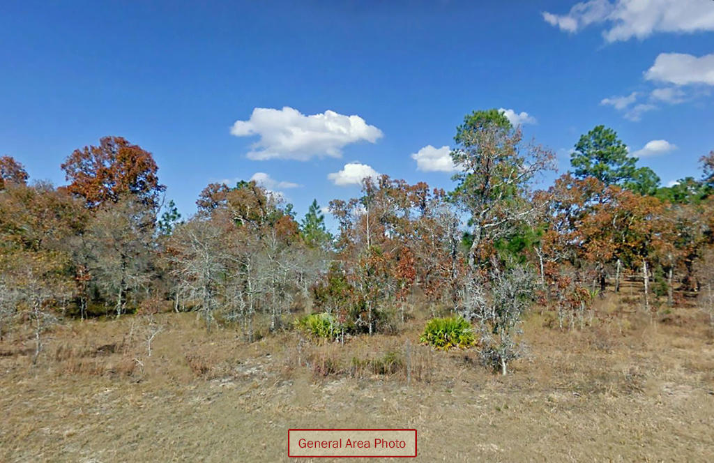 Three Combined Lots With Trees and Paved Road Access - Image 4