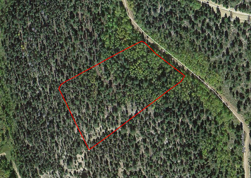 Treed Sanctuary on Colorado Mountainside - Image 1