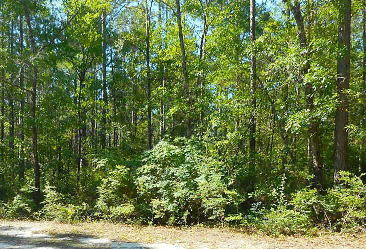 Over a Quarter of an Acre Lot in Fountain Florida - Image 4