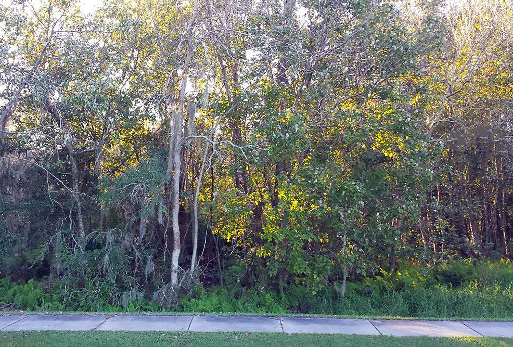 Dazzling Homesite Outside of Tampa - Image 3