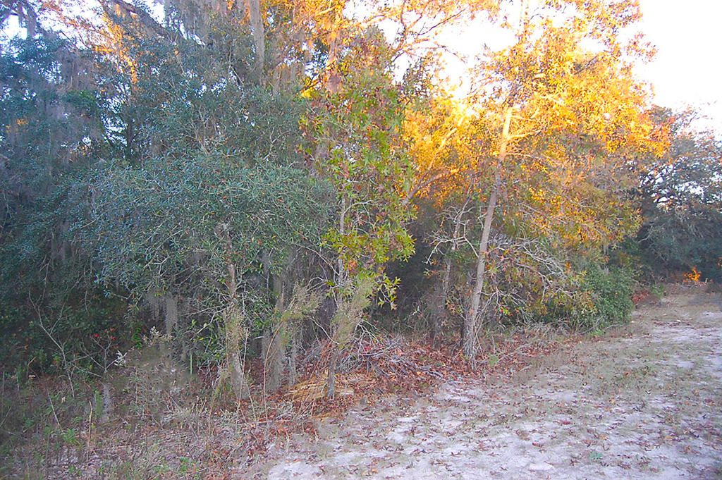 Treed property in a Quiet Neighborhood Close to Beaches - Image 4