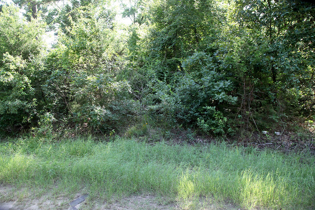 Enjoy a Wooded Property with Power and Water Available - Image 4