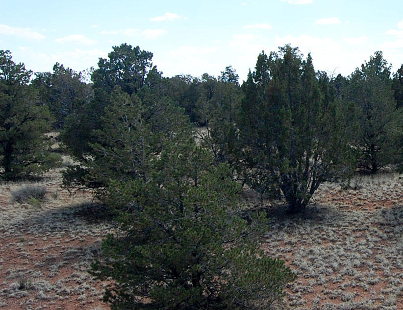 1+ Acre Gem Less than an hour from the Grand Canyon - Image 5