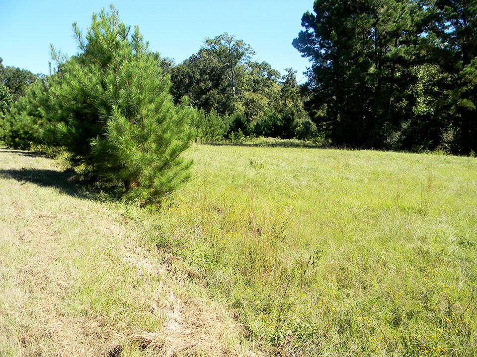 A Peaceful Countryside Lot in Trinity Plantation - Image 2