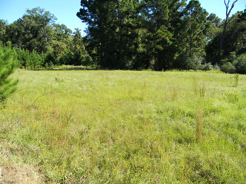 A Peaceful Countryside Lot in Trinity Plantation - Image 3