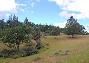 California Acreage Near Copco Lake - Image 5