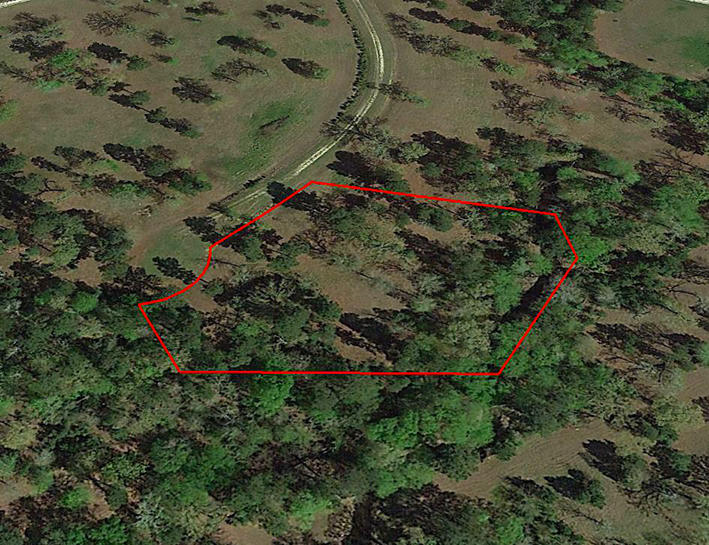 Find this Tree Covered Acreage 90 Minutes North of Houston - Image 3