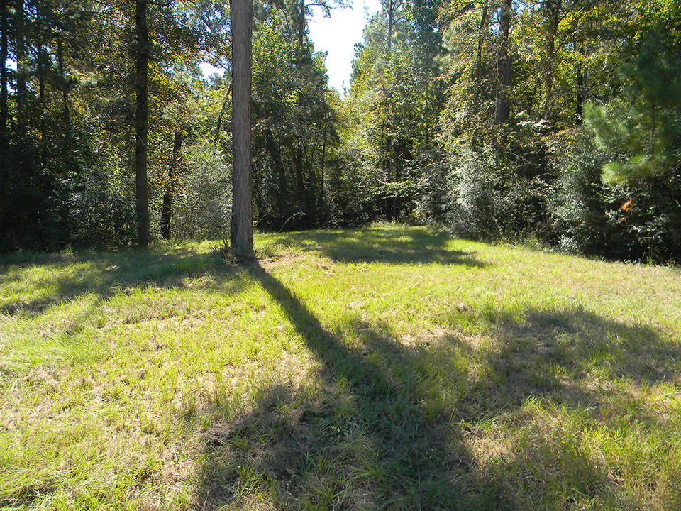 Find this Tree Covered Acreage 90 Minutes North of Houston - Image 5