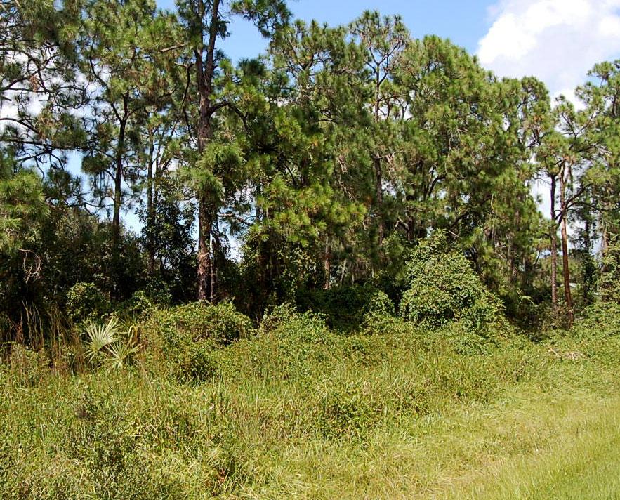 Half Acre near Lake Isokpoga in Lake Placid Florida - Image 4