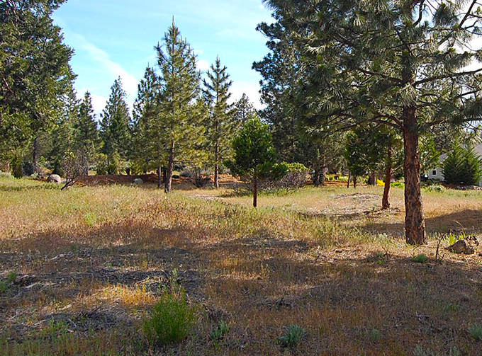 Small Lot in Developed Community in Weed California - Image 4
